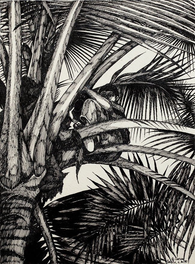 Raccolta del cocco, Ink, 23×31 cm